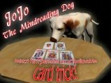 JoJo the Mindreading Dog